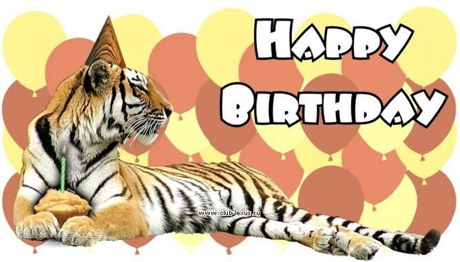 Парень, открытка день рождения с тигром
